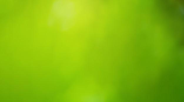 ぼやけた緑の葉の新鮮な背景