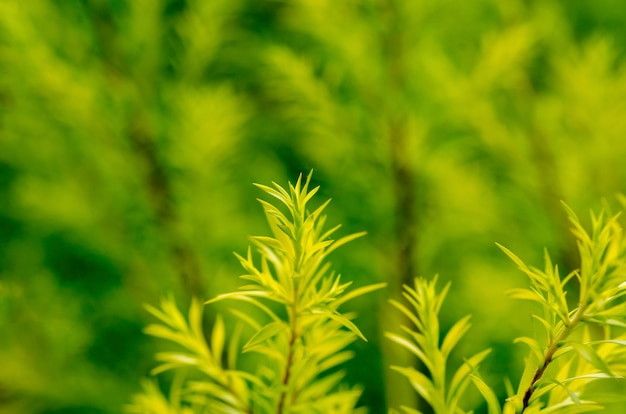 Blurred green leaves with blurred pattern background