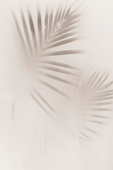 Blurred green palm leaves on off white background