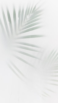 Blurred green palm leaves on off white