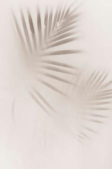 흐린 녹색 종려 잎에 흰색 배경