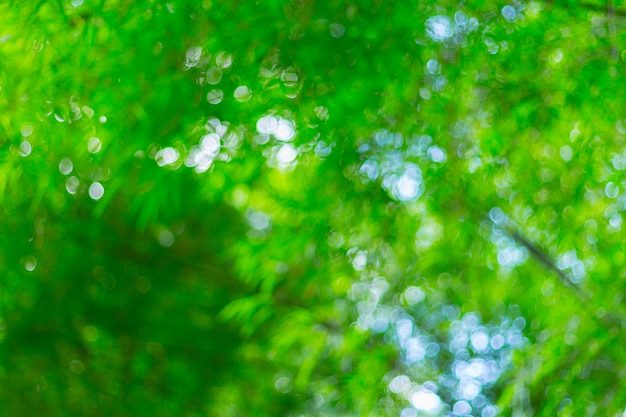 Blurred image of bamboo forest