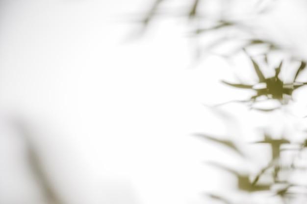 白い背景にぼやけた葉影