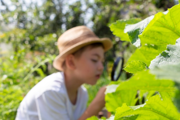 Blurred out of focus adorable little child boy in straw hat look at green plant leaves