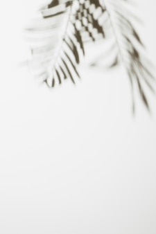 Blurred palm leaves isolated on white background