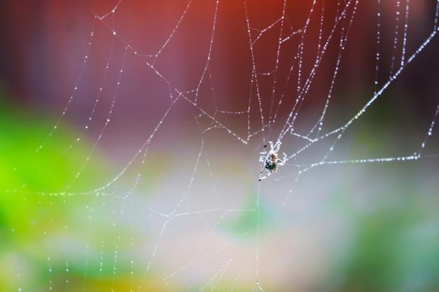 흐리게 비 드롭 패턴 추상 거미줄 자연 및 비 드롭 배경