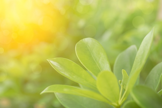 Blurred and soft of green leaves nature color for background,green nature love concept