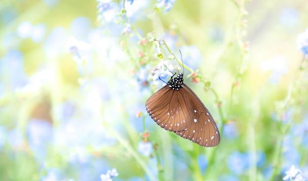 Размытые мягкие изображения красивой бабочки с коричневыми крыльями в цветнике