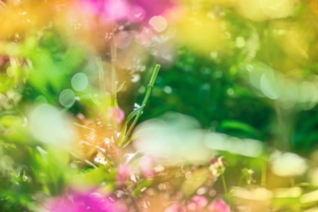 Blurry bokeh flower background