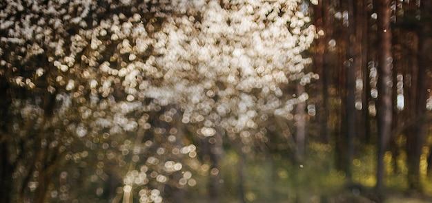 森の中のぼやけた花