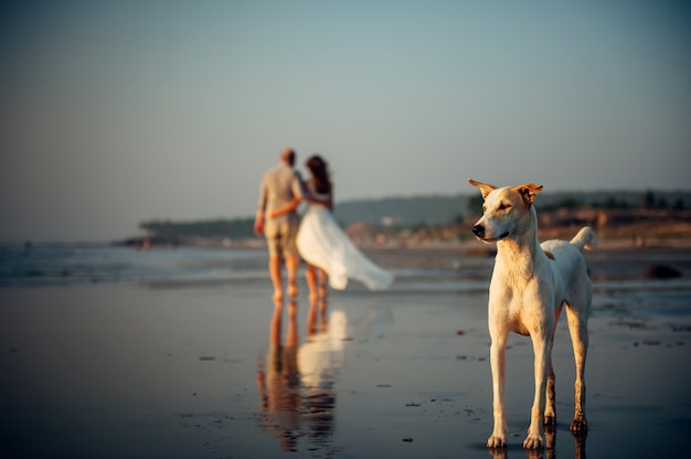 Blurry image of happy couple walking on the beach. in the foreground, a dog stands on the sand. man and woman in an embrace are removed along the seashore. vacation concept