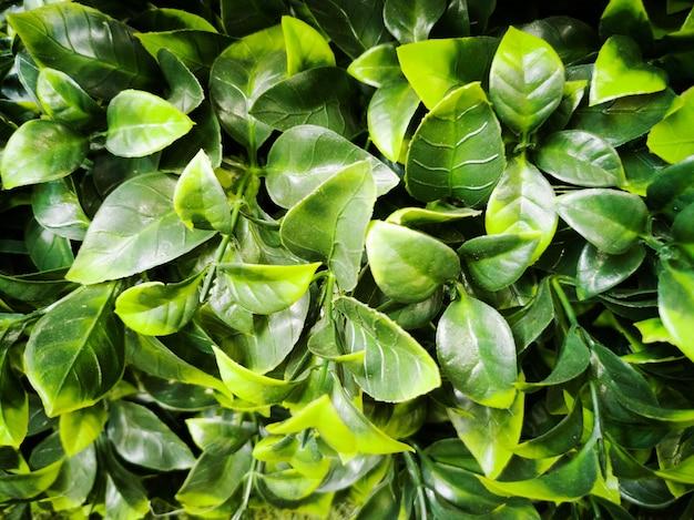人工緑の葉の背景のぼやけ