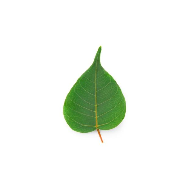 ボーの葉ハート型の葉は白でロングエンド