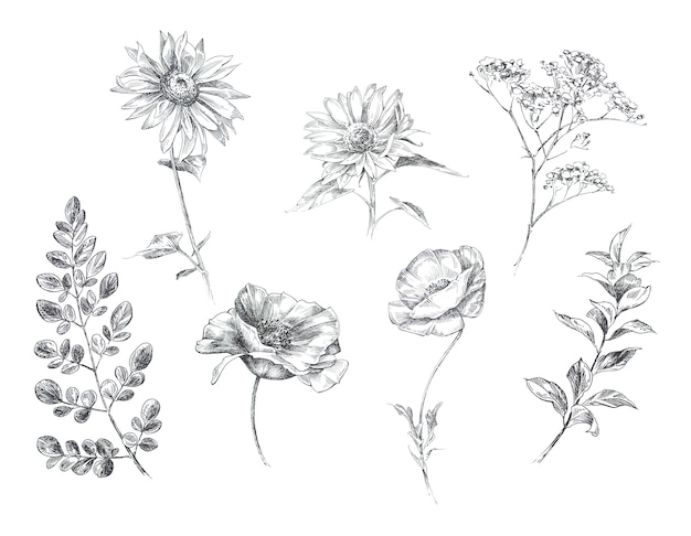 グラフィック手描きの自由bo放に生きる花が分離されました。ビンテージの素朴な花のデザイン。