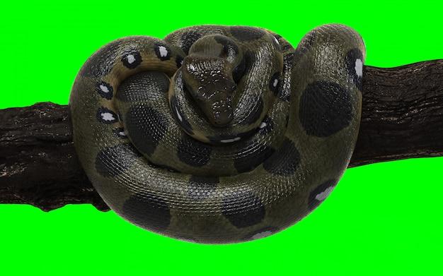 Anaconda Vectors, Photos and PSD files | Free Download