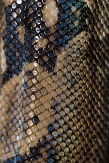 Boa constrictor skin