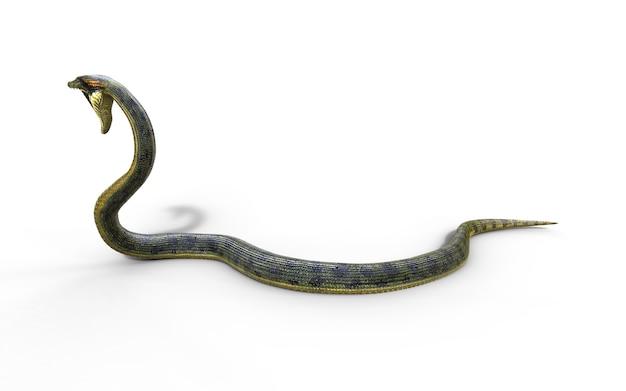 Boa constrictor the world's biggest venomous snake