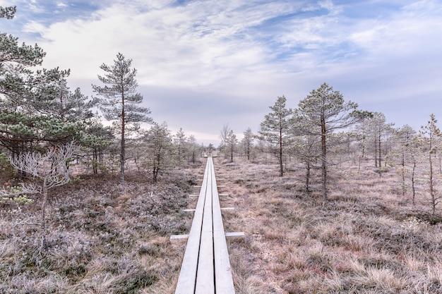 Boardwalk in raised bog, frozen plants and the hoar-frost. kemeri, national park in latvia