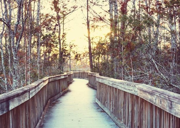 미국 플로리다주 에버글레이즈 국립공원의 늪지대 산책로.