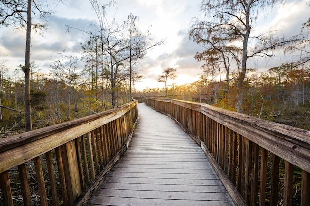 Променад на болоте в национальном парке эверглейдс, флорида, сша.