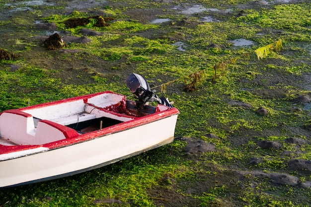 Boat stranded in the port with seaweed