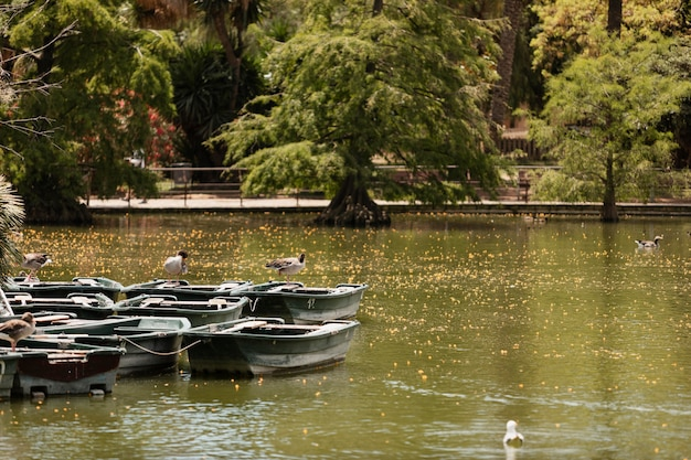 公園の湖のほとりのボート