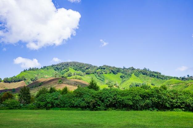 Boh tea plantation cameron highland - scenic splendor with its stark natural beauty.