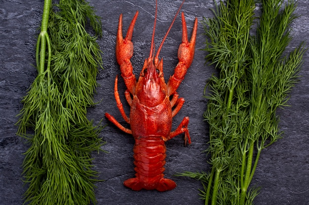 Boiled cooked crayfish crawfish ready to eat on dark blue cement background. copy space. overhead.