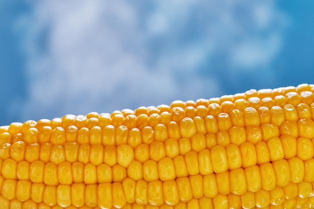 Boiled corn with a piece of butter with steam coming from it on a blue background