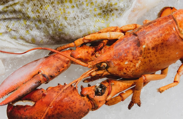 Boiled maine lobster, lobster background