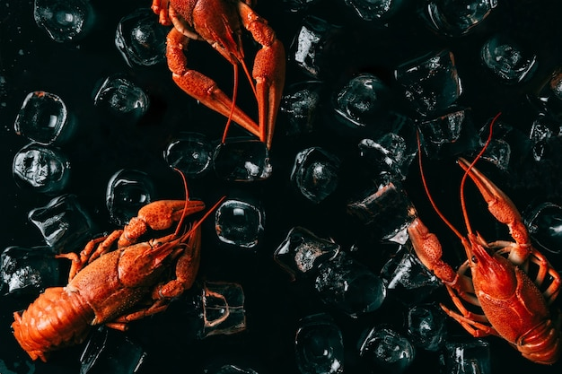 검은 배경에 얼음 조각에 삶은 전체 붉은 랍스터