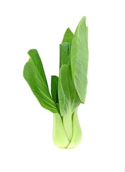 白菜に分離されたチンゲン菜