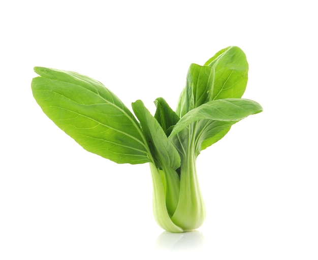 Bok choy chinese cabbage on white