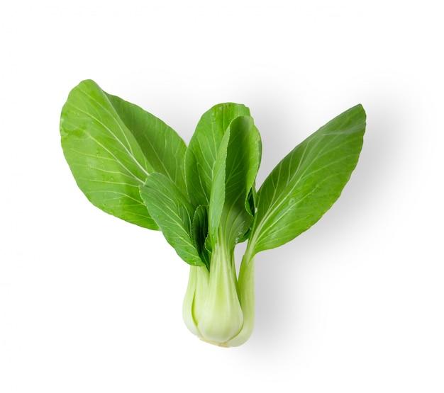 分離された白菜野菜