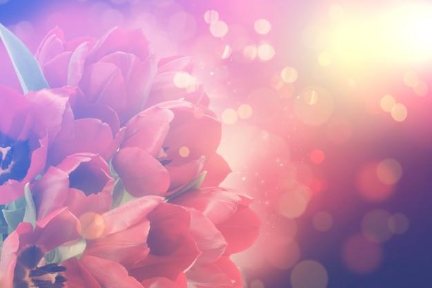 Окрашенный с bokah эффект цветочный фон