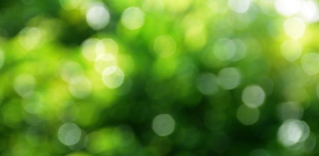 木の上の緑の葉からのボケ背景緑のボケと薄緑色のぼやけた黄色のth