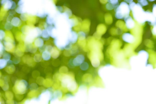 空の日光にボケ味の背景の枝の木の緑の葉をぼかす