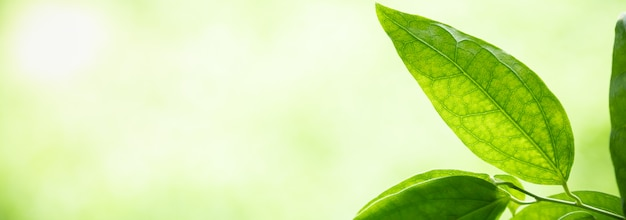 Закройте вверх взгляда зеленого цвета взгляда природы на запачканной растительности под солнечным светом с bokeh и copyspace