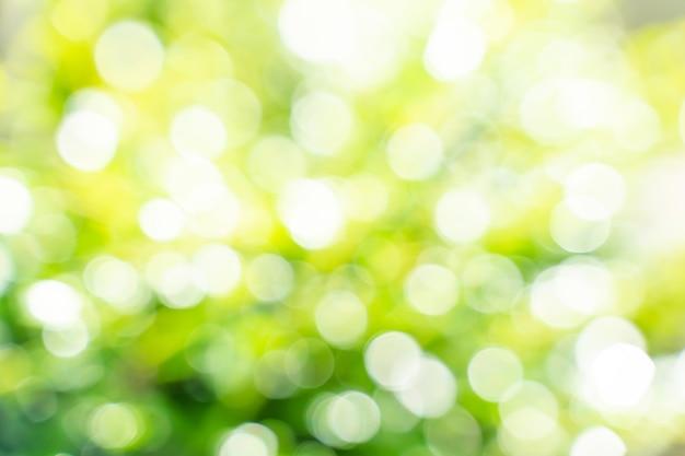 Лист боке с солнечным светом, используйте для абстрактного фона.