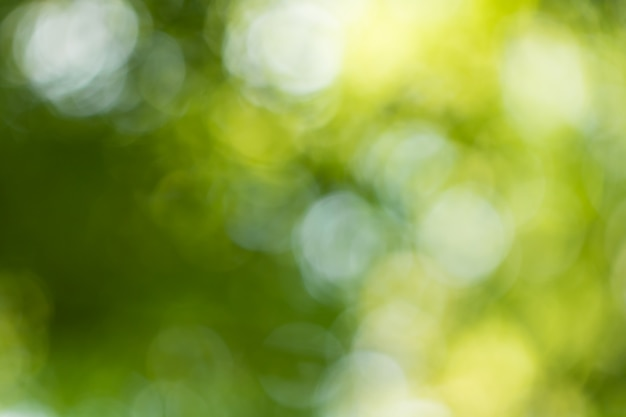 Bokeh for nature background