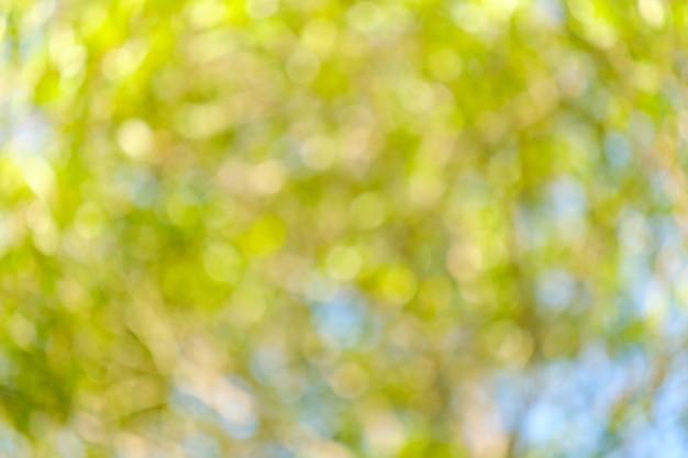 背景のボケ味、光の自然のボケ味、デフォーカス。木の葉を通して輝く太陽の光。抽象的な自然の背景、自然の緑のボケ味。