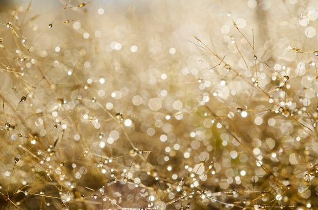 ピンぼけパターンとぼやけた草の上の水滴