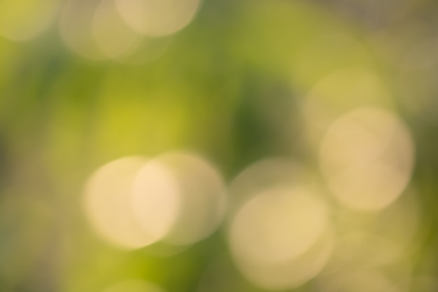Bokeh of tree leaves for nature background and save green concept