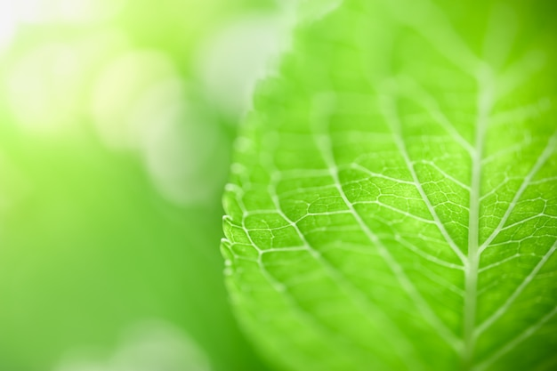Закройте вверх лист банана зеленого цвета взгляда природы на запачканной предпосылке растительности под солнечным светом с космосом bokeh и экземпляра.