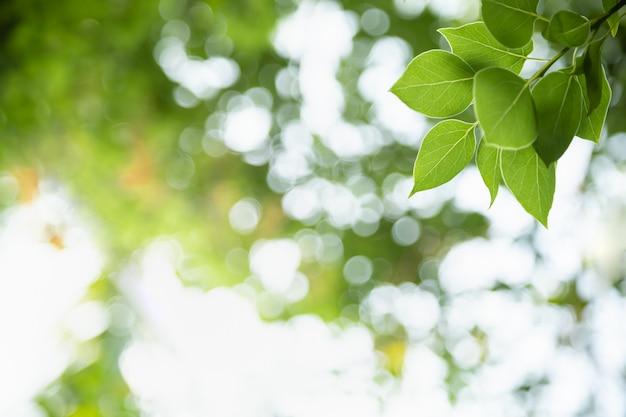 Закройте вверх лист зеленого цвета взгляда природы на запачканной предпосылке растительности под солнечным светом с ландшафтом заводов предпосылки космоса bokeh и экземпляра естественным, концепцией крышки экологичности.