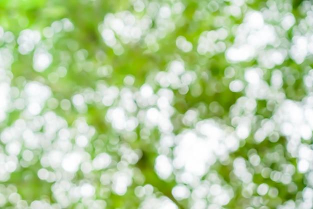 Селективные зеленые лист природы с предпосылкой bokeh солнечного света. винтажный стиль тона цвета.