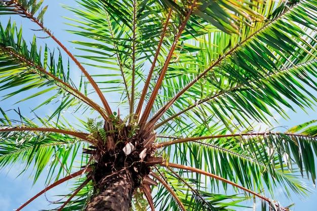 Пляж тропической природы чистый и белый песок в лете с светом солнца - голубым небом и предпосылкой bokeh.