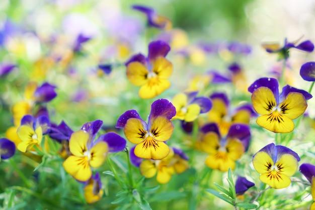Селективный фокус красивых красочных цветков с предпосылкой bokeh лета. винтажный стиль цвета.