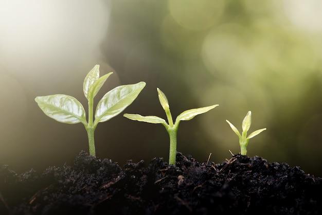 緑色の自然の上に成長する若い植物bokeh背景の成長の概念