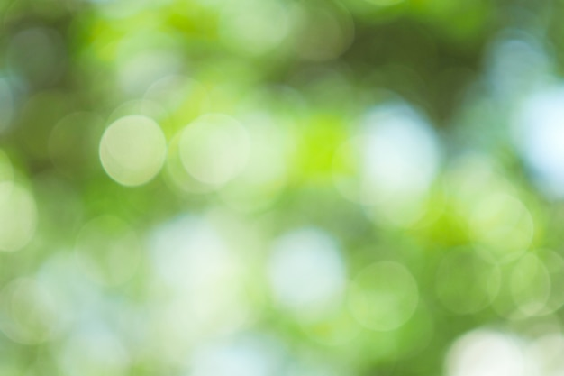 Абстрактное зеленое bokeh из предпосылки фокуса от дерева в природе